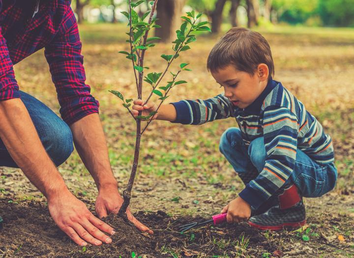 Sadenie stromčekov. Ako prijať nových členov rodiny?