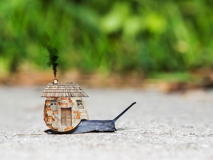 Dom by mali stavať slimáky! Prečo?