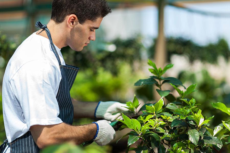 stova-zahrada