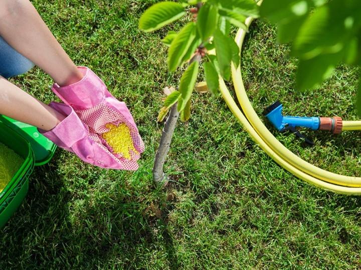 Hnojenie trávnika je dôležitá súčasť starostlivosti