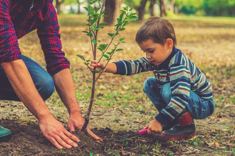 Ako stromy správne zasadiť?