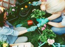 Chystáte sa pestovať kvety? Brzdite a položte si týchto 6 otázok