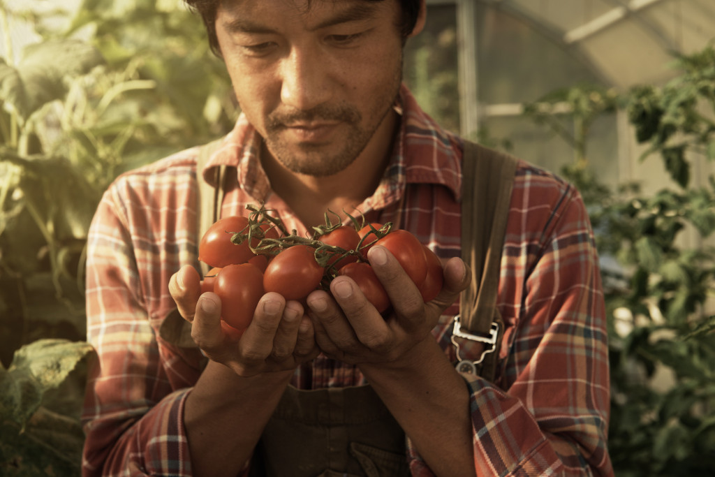 Closeup shot of a man admiring some tomatoes in his organic greenhousehttp://195.154.178.81/DATA/istock_collage/a5/shoots/785403.jpg