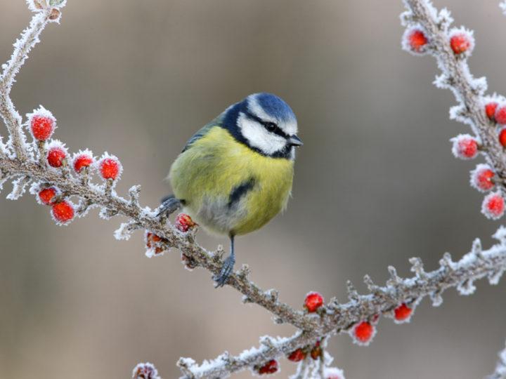 Kto sa aspoň trochu môže tešiť z teplej zimy? Záhrada!