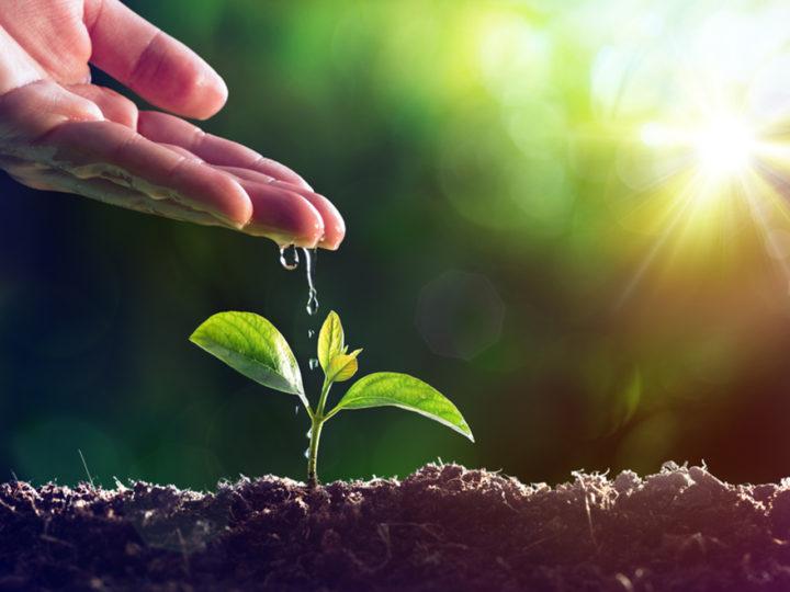 Pri sadení netreba zázračnú pôdu a šťastie, len šikovnejšie ruky