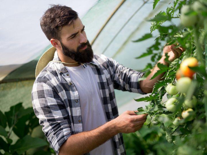 Pri výbere skleníka tradície bokom. Šťavnatú úrodu zaručí moderný polykarbonát!