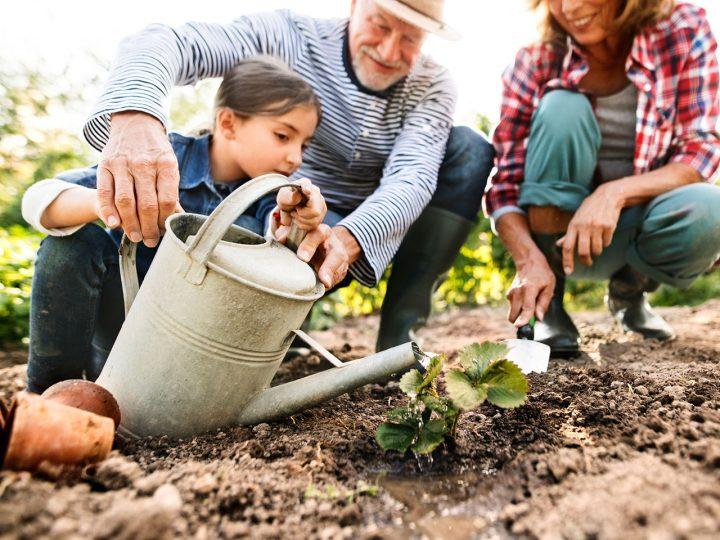 Nedarí sa vašim rastlinám či úrode? Potrebujete nájsť správnu zem!