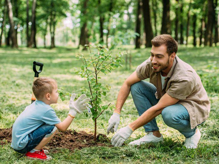 Prečo sa práve s nami počas jesene vyplatí sadenie ovocných stromov dvojnásobne?
