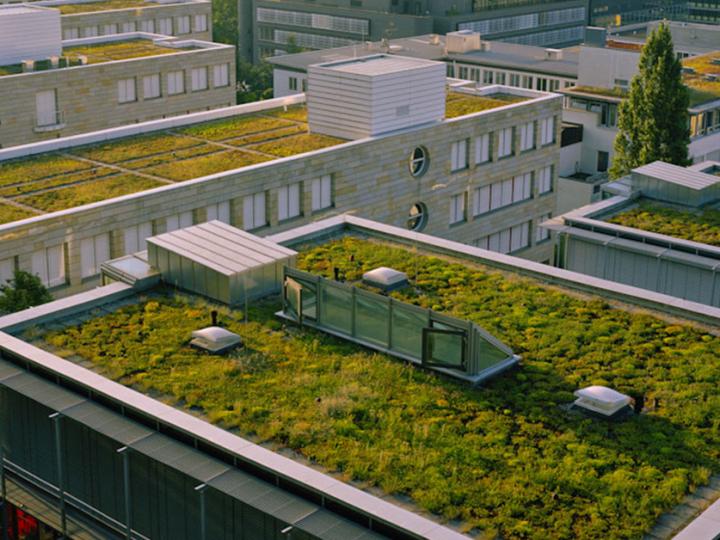 Ako na vegetačnú strechu? Dobrý návrh a poctivá realizácia predstavuje polovicu úspechu jej správneho fungovania