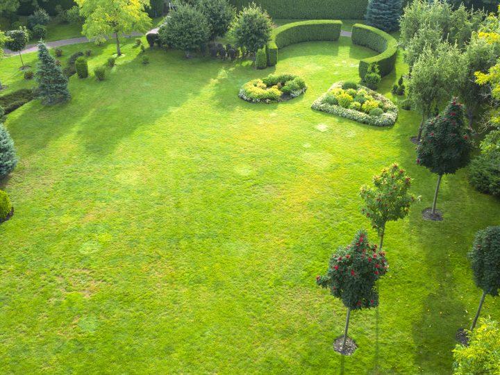 Výber ihličnanov do vašej záhrady