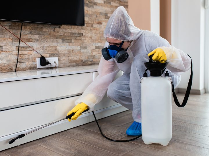 Mravce v interiéri – nevítaní hostia