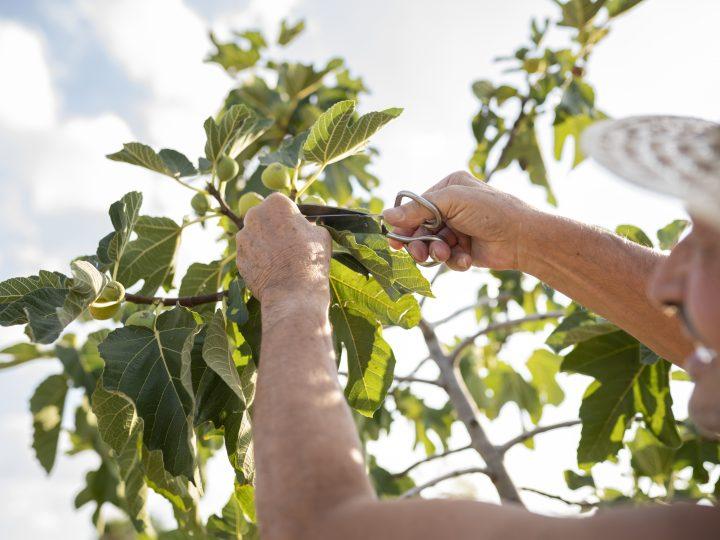Ako sa spoľahlivo postarať o vaše stromy?